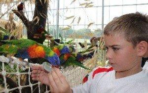 Cerza Animal Park
