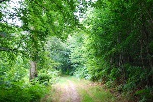 Grimbosq forest